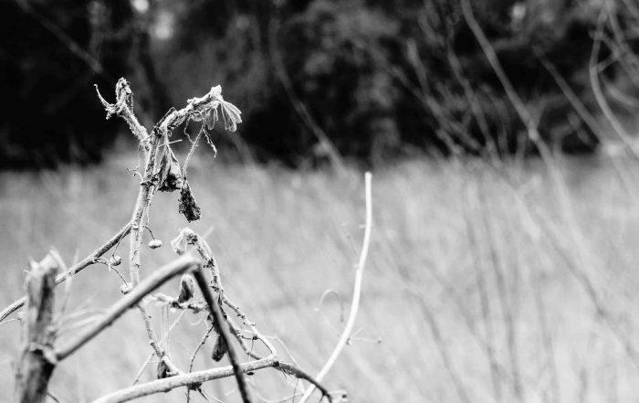 Closeup of twigs