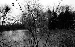 River reeds in Warwickshire, England