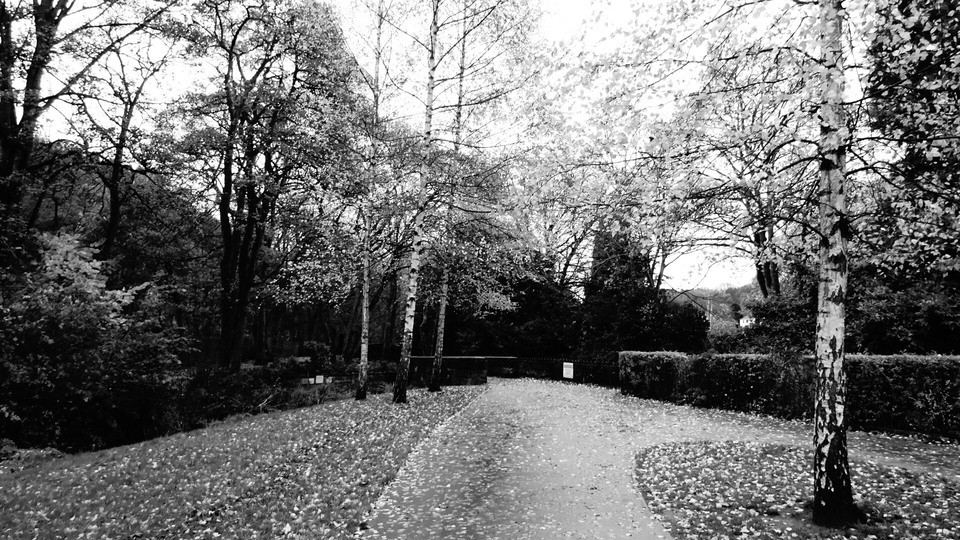 Leaved Park Path in Sheffield, England